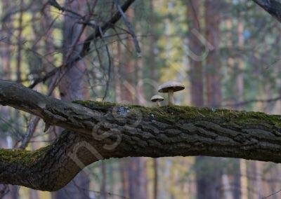 priroda-ust-aleus-_04