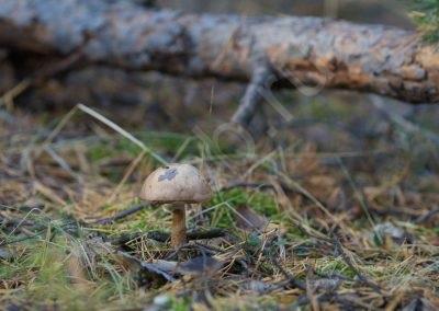 priroda-ust-aleus-_12